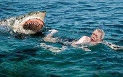 На курорте Египта погиб турист из-за нападения акулы