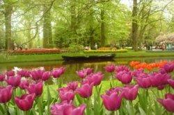 Парк цветов Кюкенхофф открылся