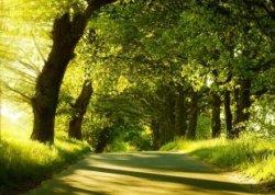 Аллею из 70 деревьев высадят в Поставах 4 апреля