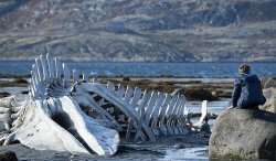 Поселок из российского фильма «Левиафан» станет туристическим центром