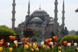 В Стамбуле начался фестиваль тюльпанов