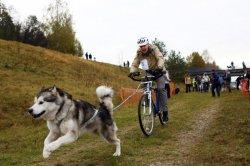 2 мая в Вязынке пройдут гонки на собачьих упряжках