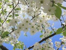 Беларусь туристическая: праздники и фестивали мая