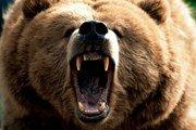 Спасатели Камчатки советуют туристам громко петь в лесу: бурые медведи вышли из спячки
