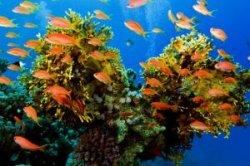 Дайверы почистили дно Красного моря в акватории Хургады