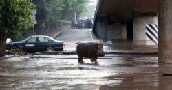 Зоопарк Тбилиси переедет на новую территорию