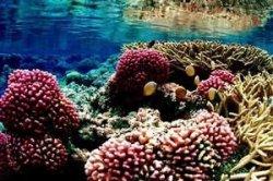 У берегов Таррагоны в Испании построят искусственные рифы
