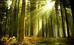 В семи районах страны отменили запрет на посещение лесов