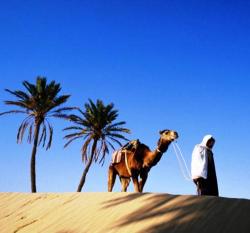 МСиТ рекомендует туристам воздержаться от поездок в Тунис