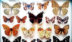 На выставке в Гомеле представлены самые красивые и знаменитые бабочки мира