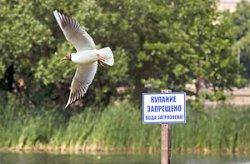 В Минской области запрещено купание в двух зонах отдыха