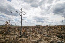 Для иностранцев посещение Ольманских болот сделают платным