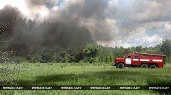 Запрет на посещение лесов Гродненской области вводится с 5 августа