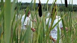 Гостей экофестиваля «Споровские сенокосы» научат определять местных болотных птиц