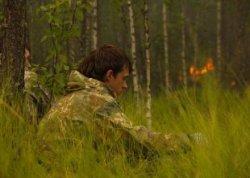 Запрещено посещать леса Глубокского и Поставского районов