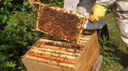 14 августа в Полоцке организуют праздник для пчеловодов и гурманов