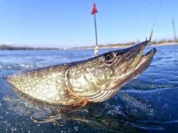 Главные рыболовы страны собираются на Соже