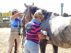 В Дзержинском районе состоялись любительские соревнования по дистанционным конным пробегам