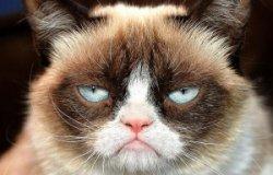 Сердитый кот будет увековечен в Музее мадам Тюссо