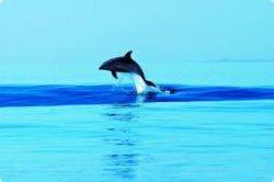 В Ровине предлагают фотосафари к дельфинам