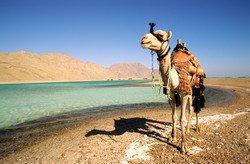 Египет начинает борьбу за свой туристический имидж