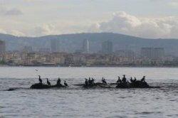 Остров Вордониси станет новой достопримечательностью Турции