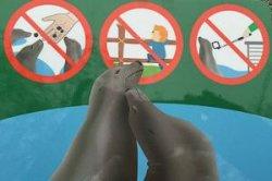 Венский зоопарк запретил делать селфи