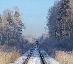 Конфликт. Что помешало туристической компании из Новополоцка организовать поезд в Беловежскую пущу?