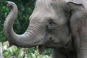 В Индии могут запретить катание на слонах