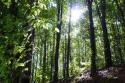 Испанские леса станут частью музеев