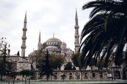 Турецкий гид спасла часть немецких туристов от гибели в Стамбуле