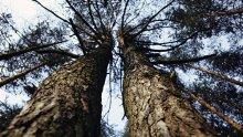 Тропа между кронами деревьев в Литве получила туристическую награду