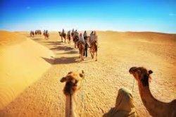 Thomas Cook прекратил продажу туров в Тунис