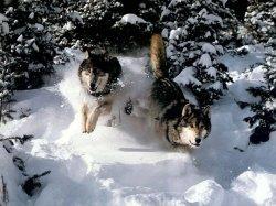 Выходные: «Снежные псы», экскурсия по мистическим местам столицы и «Супер Пупер ХИТ»