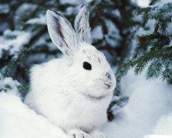 На выходных: идем на выставку кроликов, смотрим короткометражки, танцуем сальсу и встречаемся с одноклассниками!