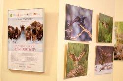 В Минске открылась выставка Сергея Плыткевича «Природный комплекс «Красный бор»