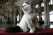 Эрмитажные коты — в рейтинге необычных достопримечательностей мира