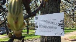 В минских парках заговорили деревья