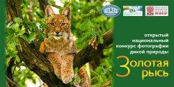 16 мая стартовал открытый национальный конкурс фотографии дикой природы «Золотая рысь»