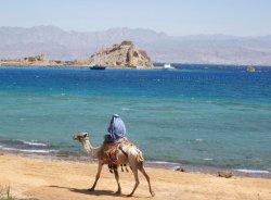 Едут ли белорусские туристы в Египет?