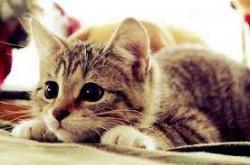 Ночь Шкодливого кота и другие: на какие ночи еще можно попасть в Музее кота