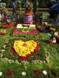 Желудок приглашает на Фестиваль цветов