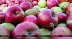 На яблочном фестивале в Брестском районе представят кулинарные шедевры
