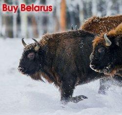 Миссия невыполнима? Как белорусский бизнес пытается вдохнуть новую жизнь во въездной туризм