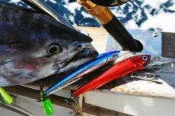 Черногория проведет Большие рыбацкие игры