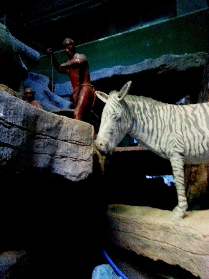 зебра в заброшеном турецком отеле