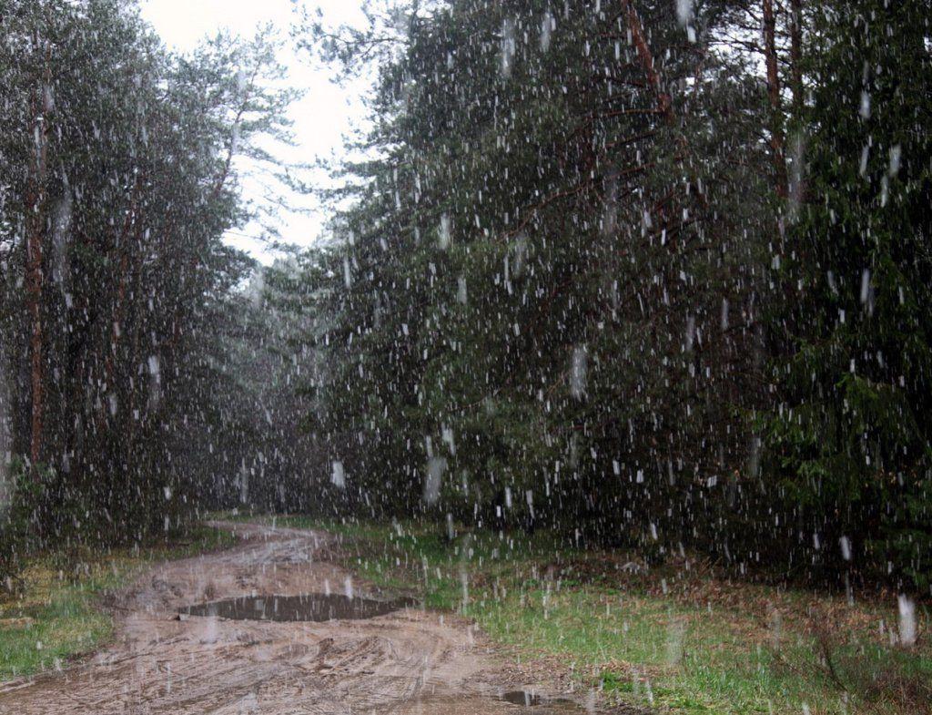 1 снег 5.jpg