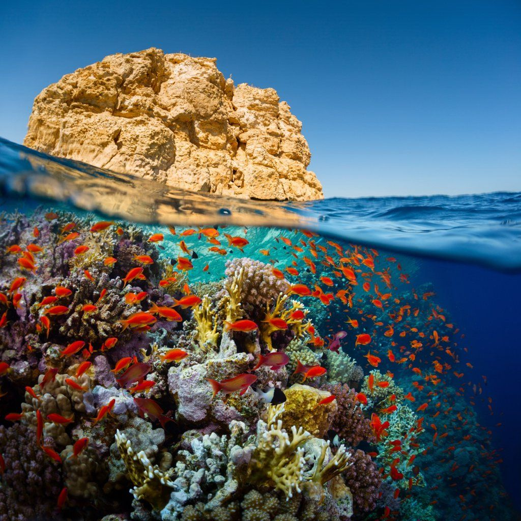 Split shot of the bright coral reef in Ras Muhammad National Park, Red Sea, Egypt_shutterstock_224716426.jpg